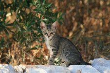 Free Kitten Stock Photo - 3873250