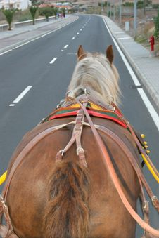 Free Horse Walking On A Road Royalty Free Stock Photography - 3873417