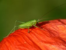 Free Grasshopper Stock Photo - 3875660