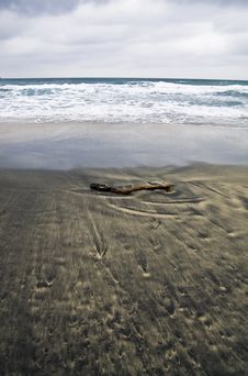 Free Driftwood In The Sand Royalty Free Stock Image - 3876186