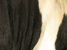 Free Cow Fur Stock Photo - 3878030