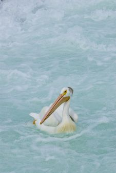 Free Single Pelican On Water Stock Photography - 3878132