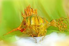 Free Fish Royalty Free Stock Image - 3879066
