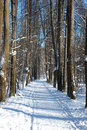 Free Solitary Winter Path In Park Stock Images - 3888394