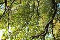 Free Tree View Upwards Royalty Free Stock Image - 3889356