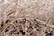 Free Ice Covered Grass Royalty Free Stock Photo - 3881695