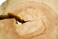 Free Structure Of A Tree. Stock Photography - 3883342