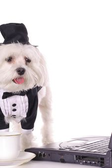 Free Formal Maltese Using Computer Stock Photo - 3884680
