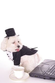 Free Business Doggy With Computer Royalty Free Stock Image - 3884686