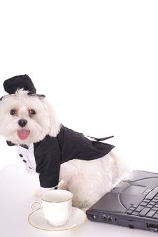 Free Taking Care Of Doggy Business Royalty Free Stock Images - 3884689