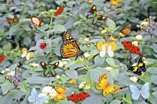 Free Butterfly Background. Stock Image - 3884721