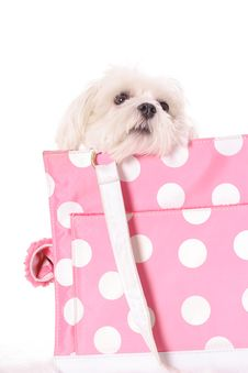 Free Pooch Peeking Over Bag Stock Photography - 3884762