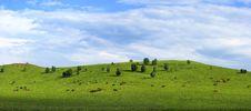 Grassland & Horse Stock Photo