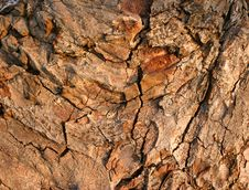 Old Tree Bark Royalty Free Stock Photo