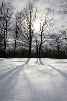 Free Naked Trees Stock Image - 3886131