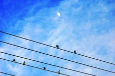 Birds On The Wire Royalty Free Stock Photography
