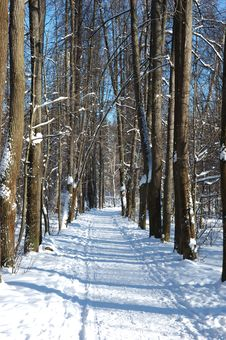 Solitary Winter Path In Park Stock Images