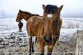 Free Winter Landscape Three Horses In The Snow Royalty Free Stock Images - 3891689