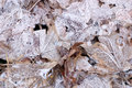Free Frozen Forest Floor Stock Photography - 3895162
