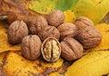 Free Walnuts Stock Image - 3895931