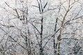 Free White Frost Texture Royalty Free Stock Photos - 3897608