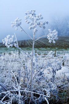 Winter Landscape White Flower Stock Photography