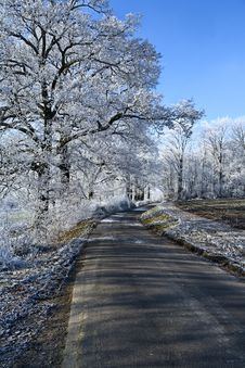 Free Winter Landscape An Icy Road Royalty Free Stock Image - 3891426