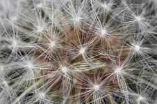 Free Closeup Of Dandelion Stock Images - 3893534