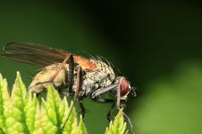 Closeup Of A Garden Fly Stock Photo