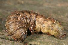 Free Garden Caterpillar Stock Photos - 3894113