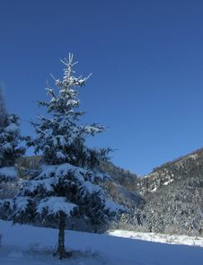 Winter Tree Royalty Free Stock Photography