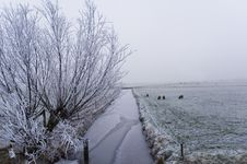 Free Winter Scene Stock Image - 3895021