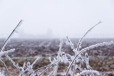 Free Winter Scene Royalty Free Stock Images - 3895039