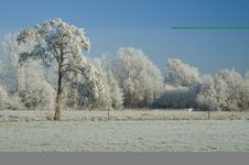 Free Ice Covered Field With Tree Royalty Free Stock Images - 3895199