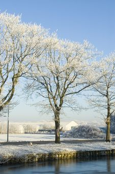 Free Snowy Trees Stock Image - 3895461