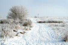 Free Frozen Tree Stock Image - 3895751