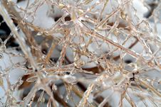 Free Ice Covered Grass Royalty Free Stock Images - 3895919