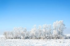 Free Frozen Trees Stock Images - 3895924