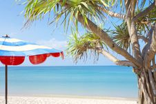 Free Palm And Umbrella Royalty Free Stock Image - 3896666