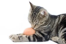 Free Cat Curiosly Smelling Egg Royalty Free Stock Images - 3896739