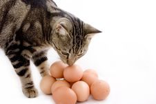 Free Cat Smelling Eggs Royalty Free Stock Photo - 3896835