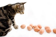 Free Cat Watching Eggs Stock Photos - 3896843