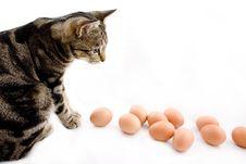 Free Cat Watching Eggs Stock Photos - 3896843