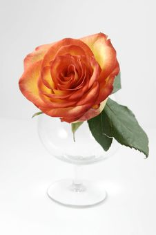 Free Beautiful Rose In Glass Isolated Stock Image - 3897841