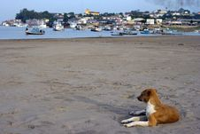Dog On The Beach Stock Photos