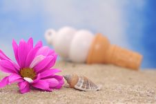 Free Flower And Sea Shell With Ice Cream Stock Photo - 3899090