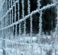 Free Frozen Fence, Deep Focusing Royalty Free Stock Photo - 398375