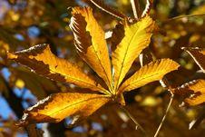 Free Autumn Leaf Stock Photo - 390600