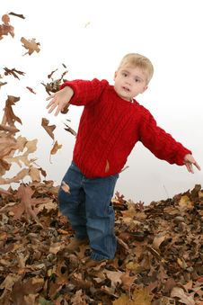 Free Adorable Two Year Old Playing In Leaves Stock Photo - 392160