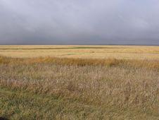 Free Field Of Gold Under Autumn Sky Stock Photo - 392420